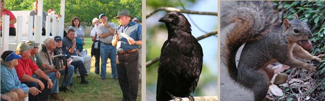 Squirrels, Crows, Bill talking to folks